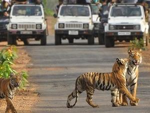 Tadoba, Home of Tiger's Fotos