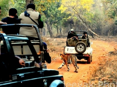 Tadoba National Park Safari