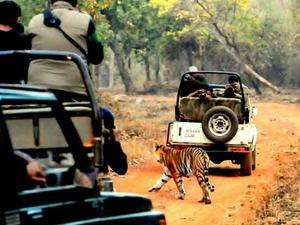 Tadoba Safari paquete 2 días