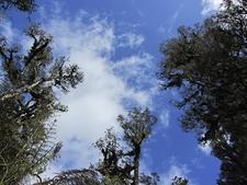 Tai Poutini Forest - South Island NZ