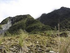 Tai Poutini Rain Forests - South Island NZ