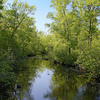 Tamarack River