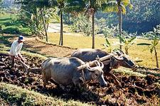 Tamenglong-Farmer