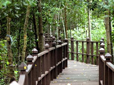 Tanjung Piai National Park - Way