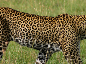 4 Days Tanzania Safaris