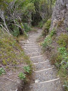 Taranaki Falls Track Views
