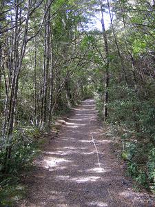 Taranaki Falls Trail - Tongariro