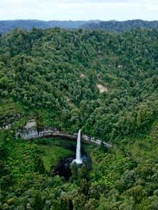 Taranaki Forest Area - North Island - New Zealand