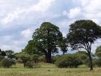 3 Day Tanzania Tented Camp Safari