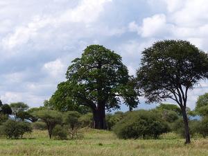3 Day Tanzania Tented Camp Safari Photos