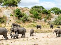 6 Day Camping Northern Tanzania Safari