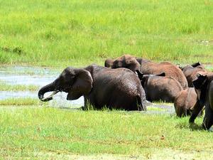Northern Circuit Safari - Tanzania Fotos