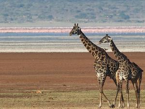 Tanzania Budget Camping 3 Days Safari Photos