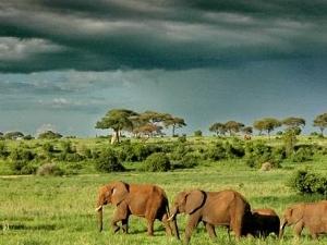3 Days Tanzania Safari Photos