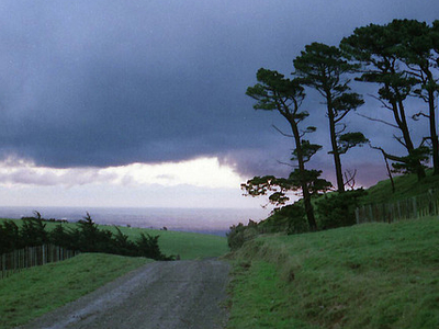 Tararua Forest Park - North Island - New Zealand