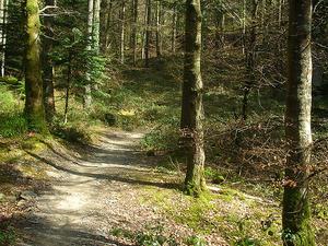 Tawa Tataweka Hut Hut Trail