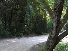 Tawai Ridge Track To Otapukawa Stream - Te Urewera National Park - New Zealand