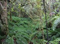 Tawarau Forest Hunting Area