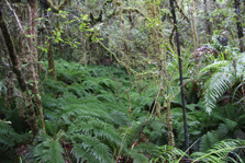 Tawarau Forest Hunting Area - North Island - New Zealand