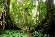 Tawau Hills Park - Tawau
