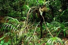 Tawau Hills Park - Plant