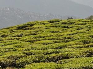 Explore Best of Himalayas Fotos