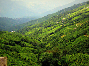 Gangtok - Darjeeling 5 Days Photos