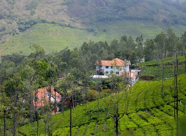 Tea Tasting & Wildlife Trail in Nilgiris Photos