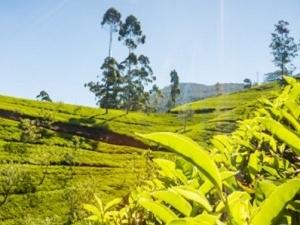 2 Day Private Tour Nuwara Eliya And Kandy Photos