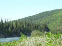 Teklanika River Campground
