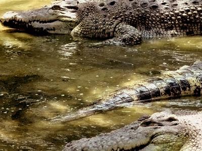 Teluk Sengat Crocodile Farm - View