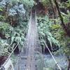 Te Maire Loop Track - North Island - New Zealand