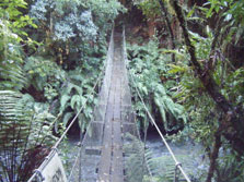 Te Maire Loop Track - North Island - New Zealand