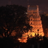 Temple Night View From Tree