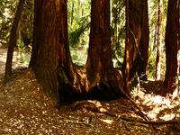 Diez Taypo Trail