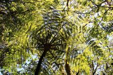 Te Pua Hut To Otane Hut Track - Te Urewera National Park - New Zealand