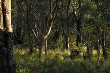Te Pua Hut To Tataweka Hut Track - Te Urewera National Park - New Zealand