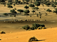 Termit Massif Total Reserve