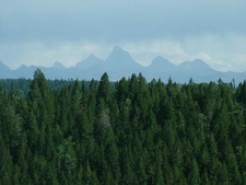Tetons From Flagg Ranch Road