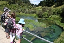 Te Waihou Springs Scenic Area - North Island - New Zealand