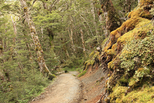 Te Waiiti Stream Via Te Pona A Pita Track - Te Urewera National Park - New Zealand