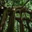 Thai Tropical Jungle View