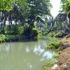 Thanikkudam