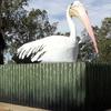 The Big Pelican
