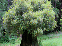 El Boy Scout Tree Trail