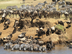 The Great Migration Photos