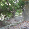 The Grove Of Sonohyan-utaki