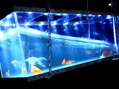 The Hanging Fishtank At The (Le) Poisson Rouge
