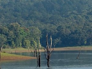 The Best of Kerala - Alleppey, Munnar And Thekkady Tour Fotos
