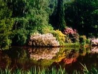 El Arboretum Kamon del Instituto de Investigación Forestal